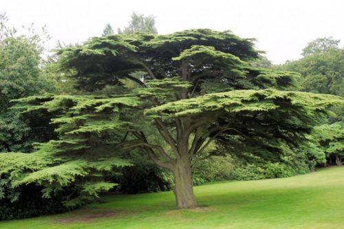 TREE OF COMMUNITY